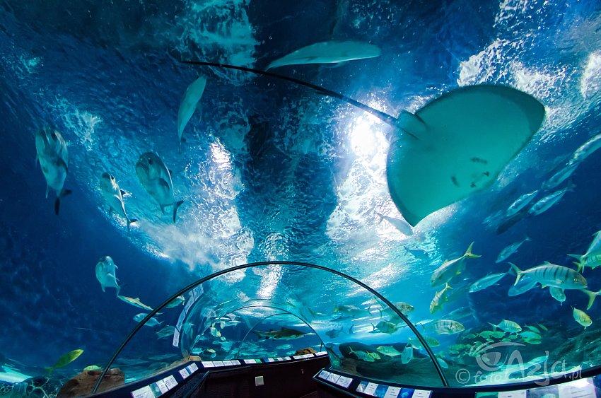 Aquarium qawra